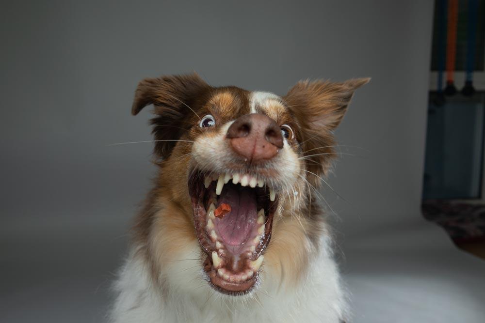 Before-Hund Fotoshooting