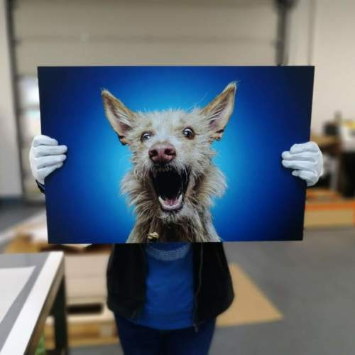 Hunde Bild gedruckt auf Alu Dibond